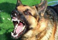 سگ گردانی بار دیگر حادثه آفرید