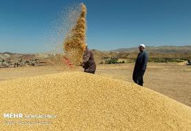 ۲.۵ میلیون تن گندم از چرخه خرید خارج شد/هشداردرباره قاچاق از کشور