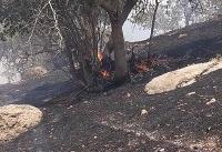 آتش سوزی در جنگل های منطقه حفاظت شده دنا +عکس