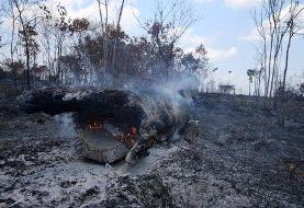 Brazil fires official after comments on illegal Amazon mining fight
