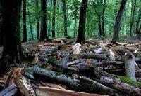 شکست بشر در نبرد با پدیده جنگل&#۸۲۰۴;زدایی
