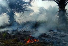 شکست بشر در نبرد با پدیده جنگلزدایی