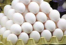 صادرات تخم مرغ به ۱۳ هزار تن رسید