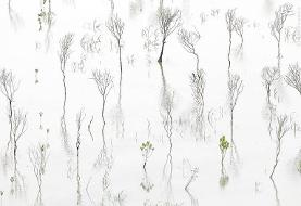 تصویری انتزاعی از جنگل حرا؛ عکس روز نشنال جئوگرافیک