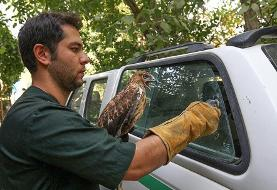 (تصاویر) رهاسازی ۶۰ پرنده شکاری در ارتفاعات همدان