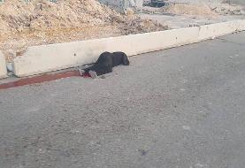 شهادت یک زن فلسطینی در گذرگاه قلندیا با شلیک نظامیان صهیونیست