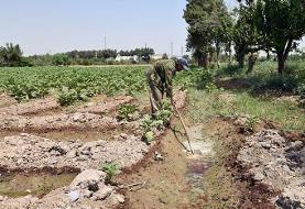 آزادسازی ۵ هزارمترمربع از زمینهای کشاورزی ری
