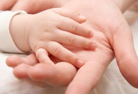 رژیم غذایی پرچرب محافظ جنین در مقابل آلزایمر
