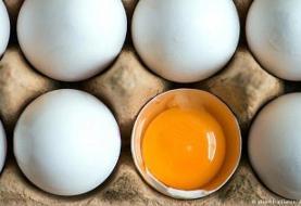 در مصرف تخممرغ هوشیار باشید!