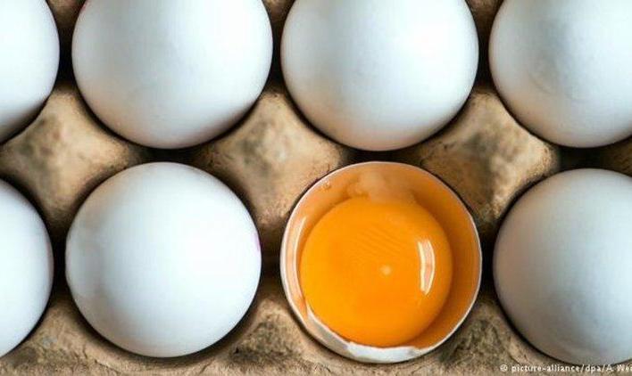 در مصرف تخممرغ هوشیار باشید