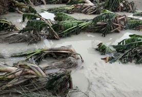 سیل زدگان سیستان و بلوچستان بی خانمان شدهاند/ نیاز شدید به کمکهای امدادی از سراسر کشور