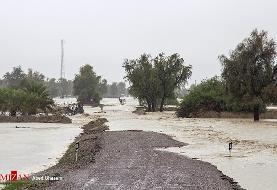 هشدار؛ مردم سیلزده سیستان و بلوچستان مراقب تمساحها باشند