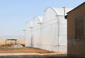 حمایت فائو در بهبود معیشت پناهندگان افغانی