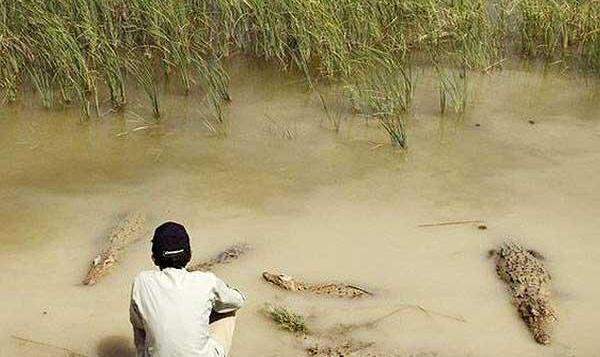 محقق خزندهشناسی به مردم سیستان در پی سیل بی سابقه:  نگران تمساح های گاندو نباشید، زمستان گوشت نمیخورند!