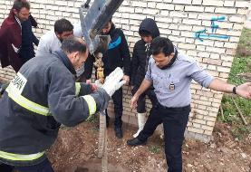 نجات گاو ۲۵۰ کیلویی از چاه چهار متری در دزفول
