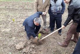 از پاکسازی نقاط بی دفاع تا کاشت ۷۰ نهال در اتوبان شهید یاسینی