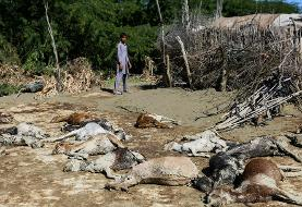 (تصاویر) تلف شدن احشام در سیل سیستان و بلوچستان