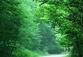 نجات گردشگران گمشده در جنگل بلیران آمل
