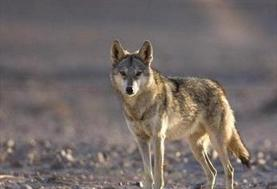 دستگیری شکارچیان غیر مجاز در فیروزکوه