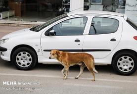 هشدار درباره نزدیک شدن گونههای جانوری به مناطق مسکونی