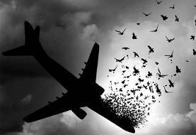 مدیریت بحران: پیکر ۱۶ جان باخته ایرانی سانحه هوایی هنوز تحویل خانواده ها نشده