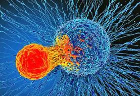 گام بزرگ در درمان سرطان | کشف روشی برای کشتن همه سلولهای سرطانی