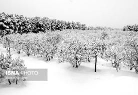 تداوم سرما و بارش برف و باران در کشور