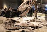 موزه تاریخ طبیعی در شیکاگو
