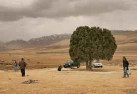 اما و اگرهای نصب مجسمه یک کارگردان: تک درخت معروف کیارستمی کجاست؟