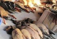 مردم از خریداری لاشه پرندگان در بازارها خودداری کنند