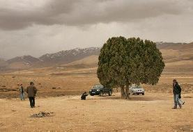 نصب مجسمه عباس کیارستمی زیر تک درخت معروفش | عکس