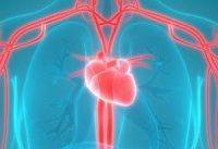 رگ&#۸۲۰۴;های خونی در زنان زودتر پیر می&#۸۲۰۴;شوند یا مردان؟
