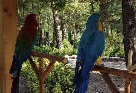 پرندههای باغ پرندگان از کجا تامین میشوند؟