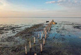 چند شات از مرگ پرندگان مهاجر در تالاب میانکاله