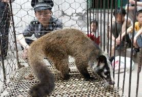 چین، تجارت حیوانات وحشی را ممنوع کرد