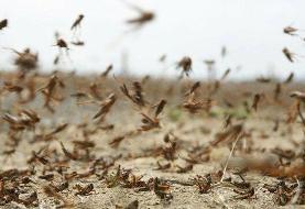 مبارزه با ملخ صحرایی در ۴۵۰ هکتار از اراضی سیستان و بلوچستان