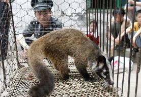China bans wild animal trade until viral outbreak eases