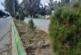 کاشت ۵ هزار اصله درخت و گل زینتی در خاش