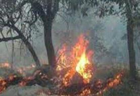 مهار آتش سوزی جنگلهای
