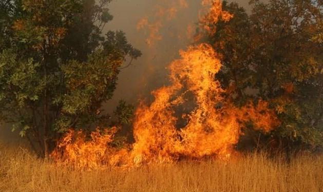 ادامه آتش سوزیهای زنجیره ای در کشور: آتش سوزی ارتفاعات کوه پهن گچساران