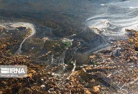 تصاویر | رشد بیرویه جلبکها در تالاب چغاخور