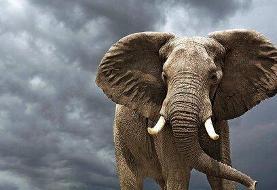 ببینید | فیل با فرهنگ و عاشق محیط زیست