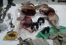 بازداشت ۴ شکارچی با دو لاشه قوچ وحشی در شاهرود