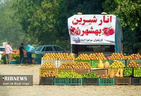 تصاویر   برداشت انار از باغهای بهشهر مازندران