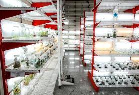 اعطای مجوز صادرات به محصولات پژوهشکده گیاهان دارویی جهاد دانشگاهی