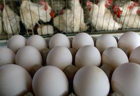 تخم مرغ کیلویی ۱۲ هزار تومان میشود؟
