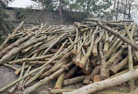 کشف یک تُن چوب قاچاق در کهنوج