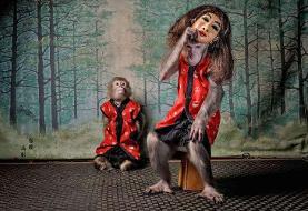 تصاویر   بهترین عکاسان اروپایی حیات وحش ۲۰۲۰   میمون ماسکدار؛ بهترین بهترینها