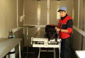 سگهای ولگرددر پناه دهکده مهربانی