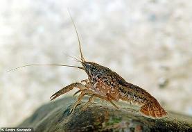 تصاویر | حمله خرچنگها به قبرستان انگلیسیها